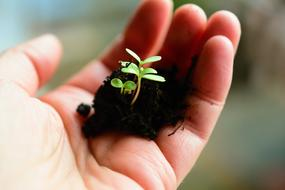 Plant Sow Grow in hand