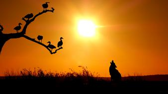 silhouette of a howling wolf against a golden sky