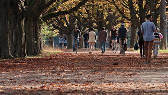 people walking and riding bicycles on alley beneath trees at fall