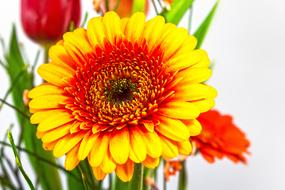 yellow and red Gerbera in bouquet