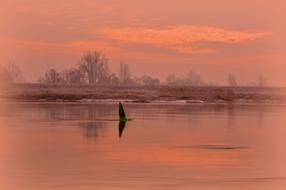 photo of a bird on a pink haze river in Furstenberg, Germany