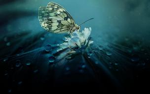 Butterfly Animal water