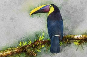 Toucan perched branch, colorful drawing