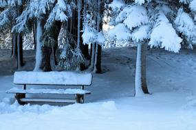 snow-covered bench under trees in winter forest