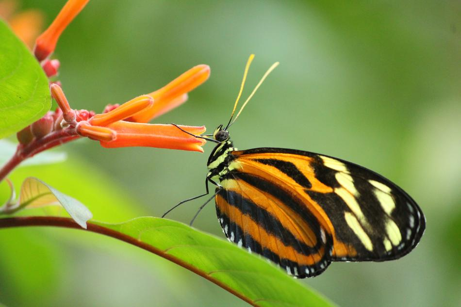 exotic Butterfly on blooming plant