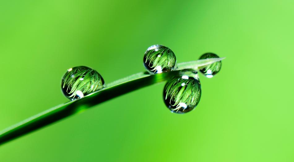 incredible Water Drops Grass