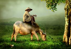 asian Man Riding cattle at scenic landscape