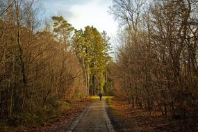 man walks along the road in the autumn forest