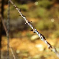 beautiful Barbed Wire