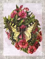 vintage butterfly flower drawing