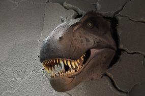 Theranosaurus head at the Museum of Natural History