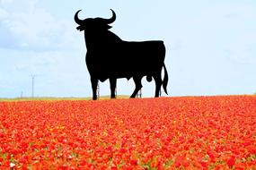Spain Bull and red flowers
