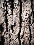 Bark Tree Wood skin