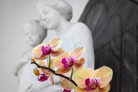 beige orchid on the background of a sculpture of the Virgin Mary and the baby