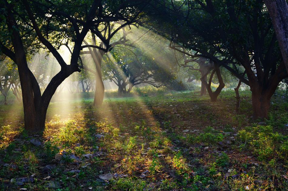 sun rays among trees in india