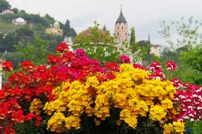 Flower Blossom and church