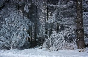 Forest Winter Snow trees