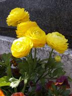yellow flowers on the grave in the cemetery