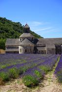 monastery and violet flowers