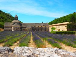 Abbaye and lavander flowers