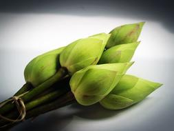 green Lotus bud