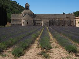 Monastery Abbey and lavander flowers
