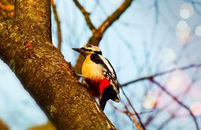 colorful woodpecker on a young tree trunk