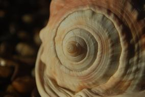 spiral shell as geometry in nature