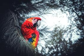 colourful parrot on the evergreen tree