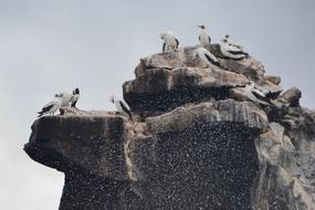 seabirds on a rock and spray of the ocean on the Galapagos islands