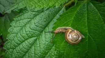 Snail Leaves Nature