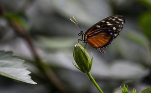 Insect Nature orange Butterfly