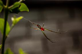 creepy red spider