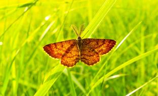 brown butterfly on bright green grass