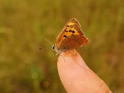 photo of a brown butterfly on a finger