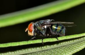 ravishing Fly Housefly Insect