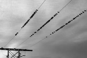 Birds sitting on Power Lines