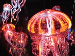 luminous orange-pink jellyfish
