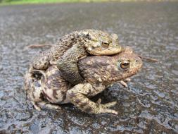 Toads Common
