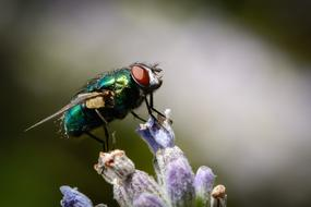 Insect Fly green