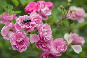 Flowers Bugs Nature pink
