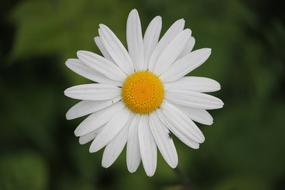 excellent Daisy Flowers