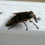 macro photo of a fly on a white window sill
