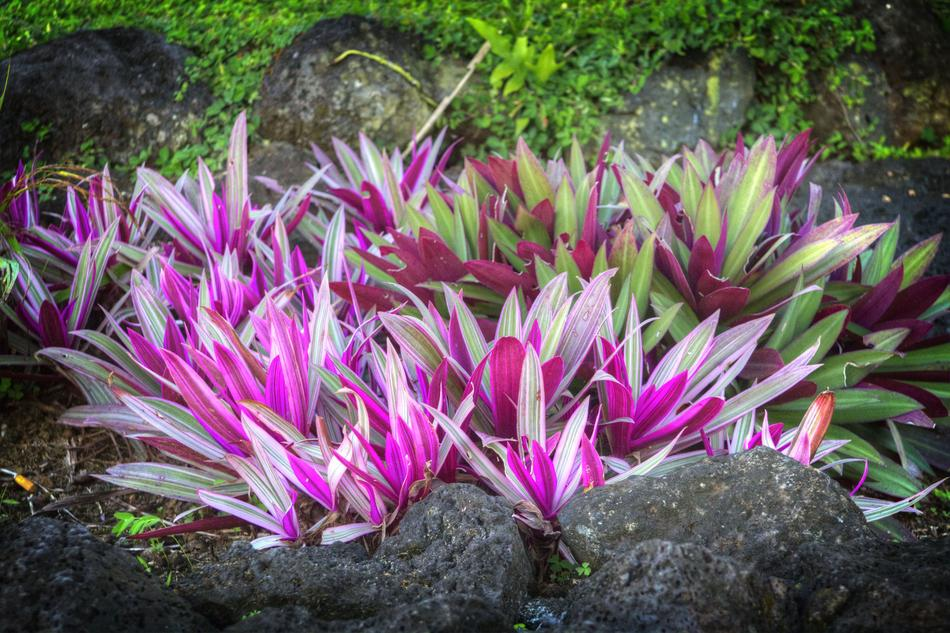 Tropical garden with beautiful and colorful plants in Samoa
