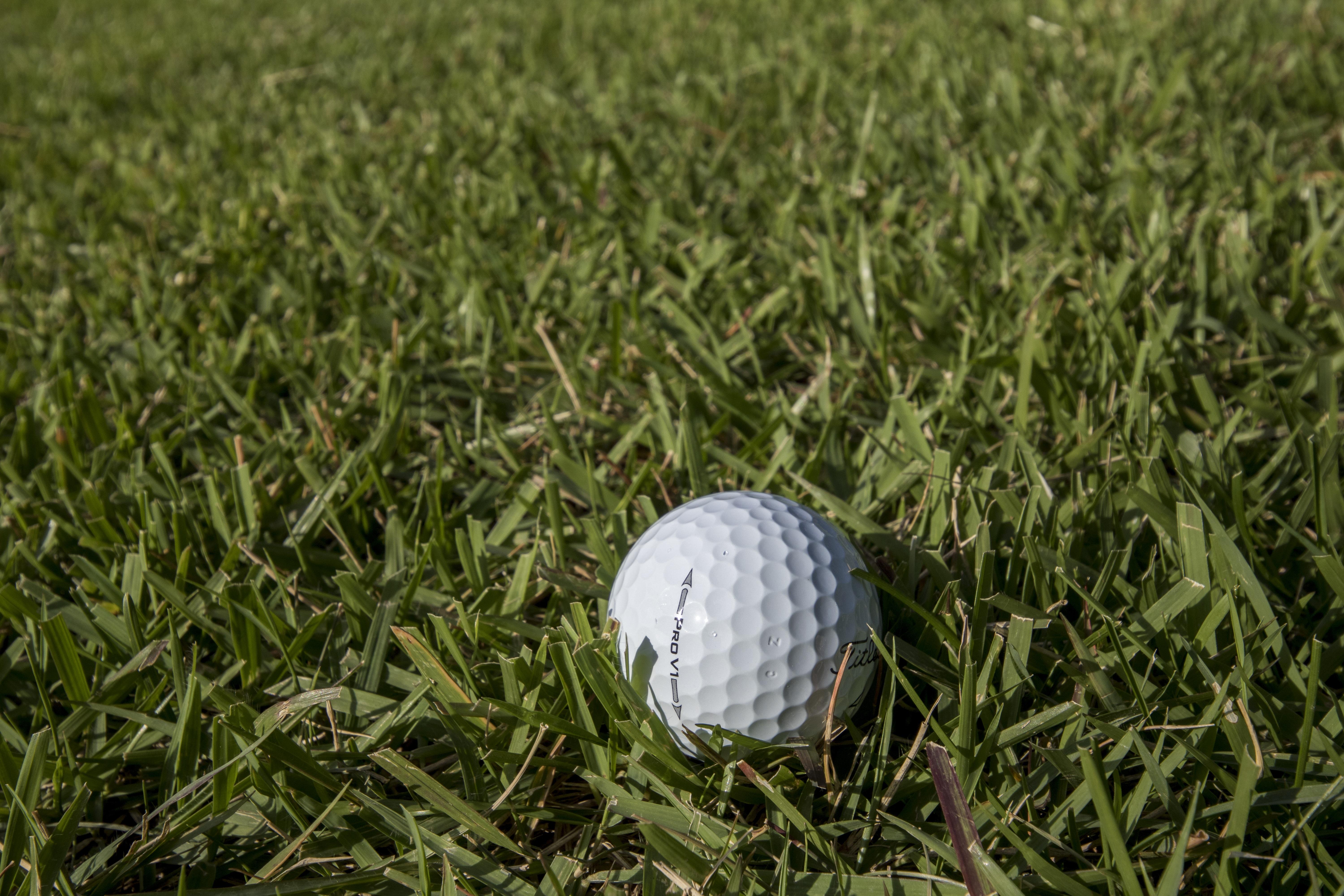 White Golf Ball In Green Grass Free Image