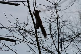 silhouette of climbing squirrel