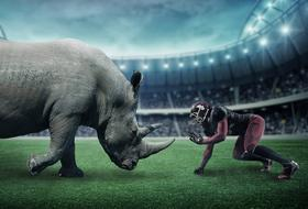 rhino and american football player in stadium