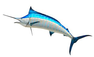 Marlin Taxidermy Fish