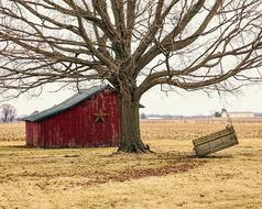 Barn Rustic and tree