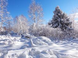 Winter Forest Snow landscape